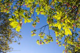 trees_039.jpg