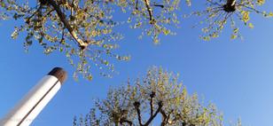 trees_004.jpg