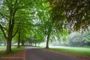 trees_031.jpg