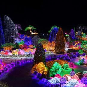 เทศกาลไฟที่สวนแห่งความสงบยามเช้า (Lighting Festival at The Garden of Morning Calm)