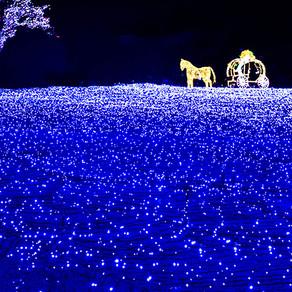 ความโรแมนติกยามเย็นที่เทศกาลแสงไฟ (Romantic Evening Out at Lighting Festivals)