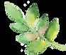 watercolor flower 3.png