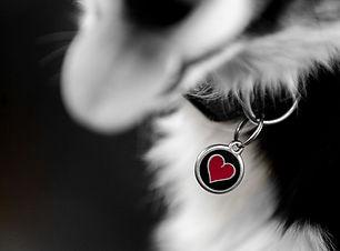 sam heart.jpg