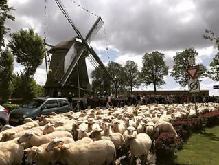 World Sheepdog Trials - Opening Ceremonies