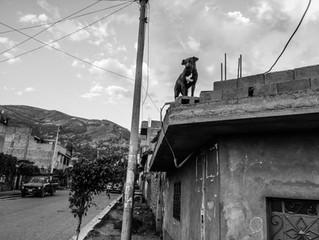 Dogs of Cusco