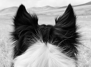 Amos Ears BW.jpg