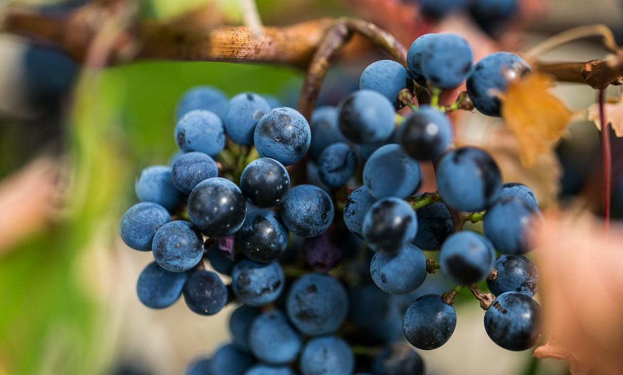 drumul-vinului-day3-gitana-fautor-1