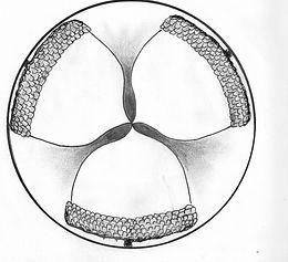 acorn logo 4.jpg