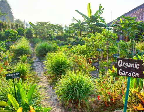 Bali-sukawati-retreat-garden-1.jpg