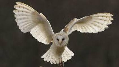 Owl Banner.jpg
