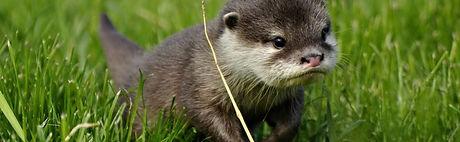 Otter Banner.jpg