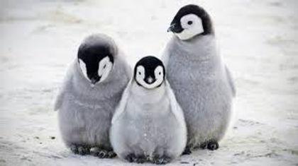 Penguin Banner.jpg