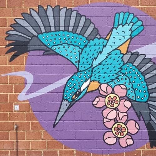 Sacred Kingfisher and Geraldton Wax