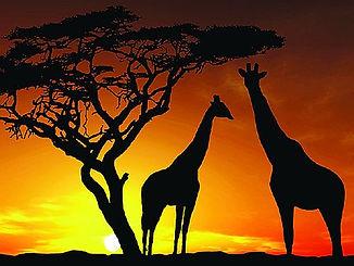 africa_2 RESIZE.jpg