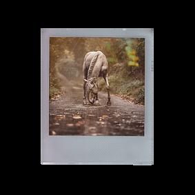 Polaroid-capiwald.png