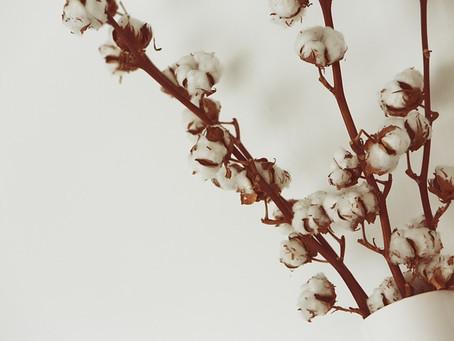 Janvier / Le mois du blanc / Comment entretenir son linge au naturel ?