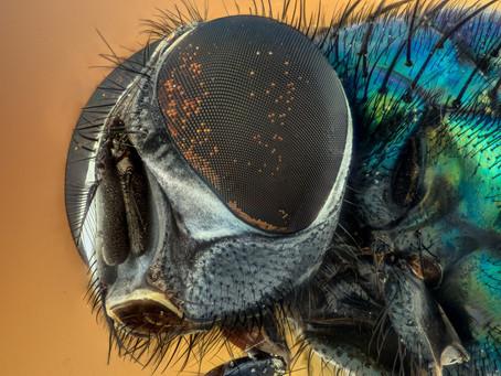 Comment prévenir et limiter l'invasion des mouches au Printemps ?