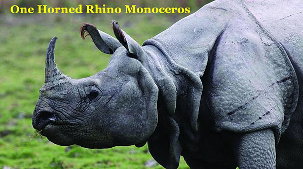 One-horned rhino.png
