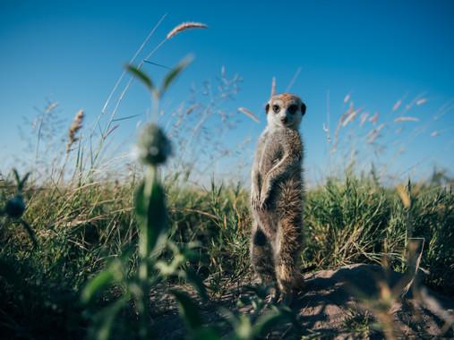 Meerkat experience 7.jpg