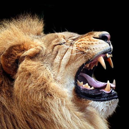 Get wild in Botswana...