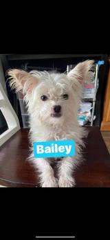 Bailey aka Gremi