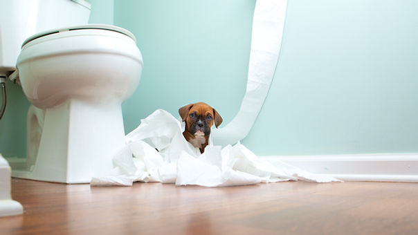 A puppy in a bathroom playing with toilet paper