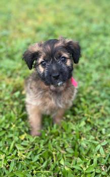9 Week Old Puppies