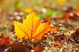 Hogyan óvjuk ősszel egészségünket, hogy ne betegeskedjünk télen?