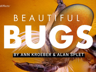 Pro Sound Effects Releases Beautiful Bugs Library