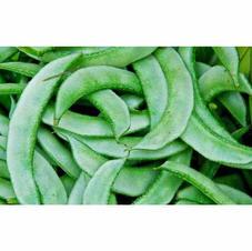 Broad Beans.jpg