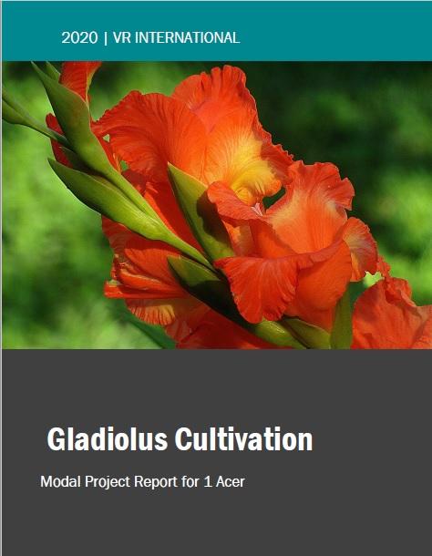 Gladiolus Farming