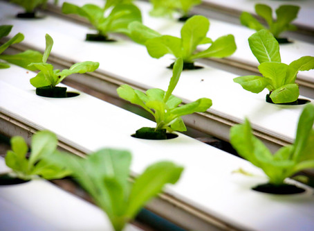 Understanding Electrical Conductivity (EC) of Hydroponics Nutrient Solution