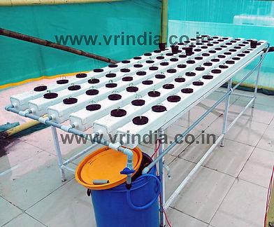 NFT hydroponics system.jpg
