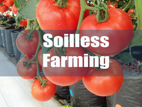 what is Soilless farming