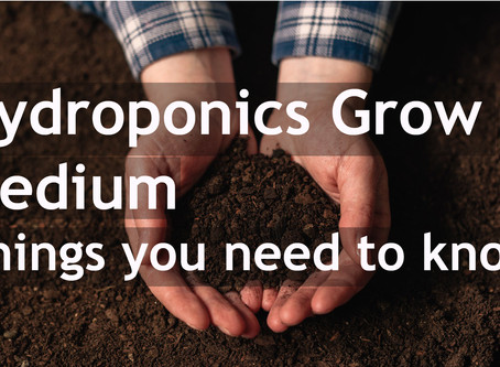 Hydroponics Grow Medium – Things you need to know