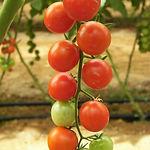 tomatoes-196799_1920.jpg