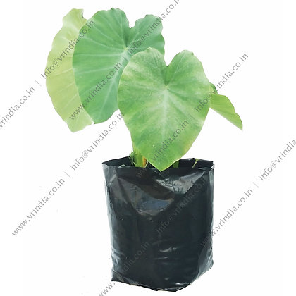 UV Stabilized Poly Grow bags 18x18 inch (Pack of 1kg)