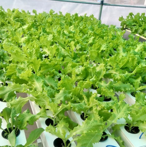 vr international hydroponics system_edited.jpg