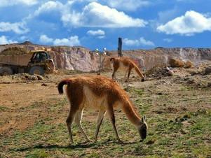"""Chubut: La minería y la ganadería son actividades """"perfectamente compatibles"""""""