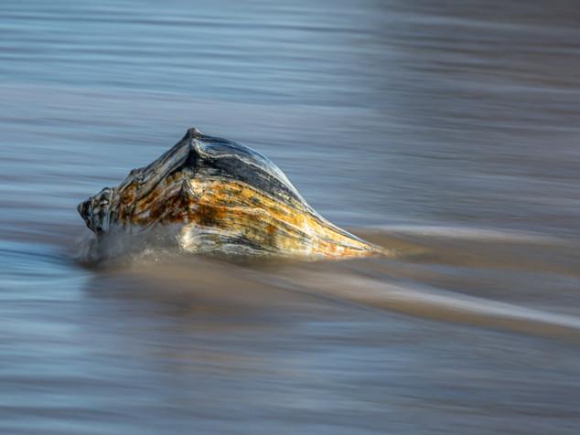 whelk ripples
