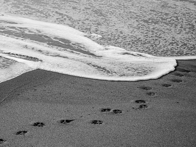 wave and paw prints
