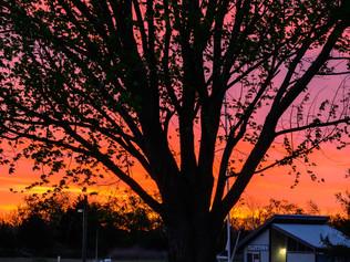 tree against orange and purple