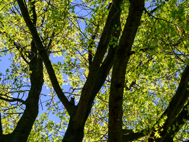 trunks and leaves