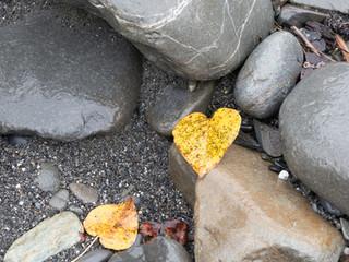 yellow hearts
