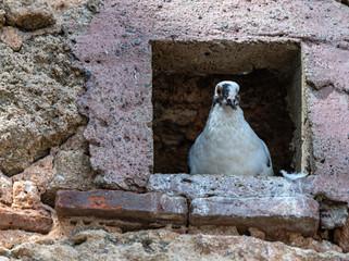 pigeon hole