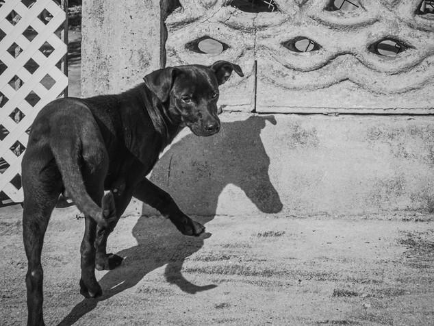 dog and shadow