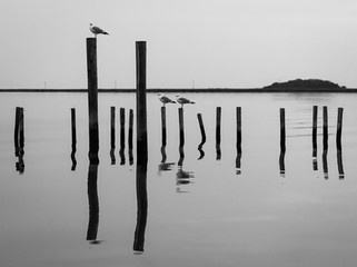 mirrored pilings
