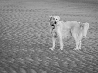 Tully and rippled sand