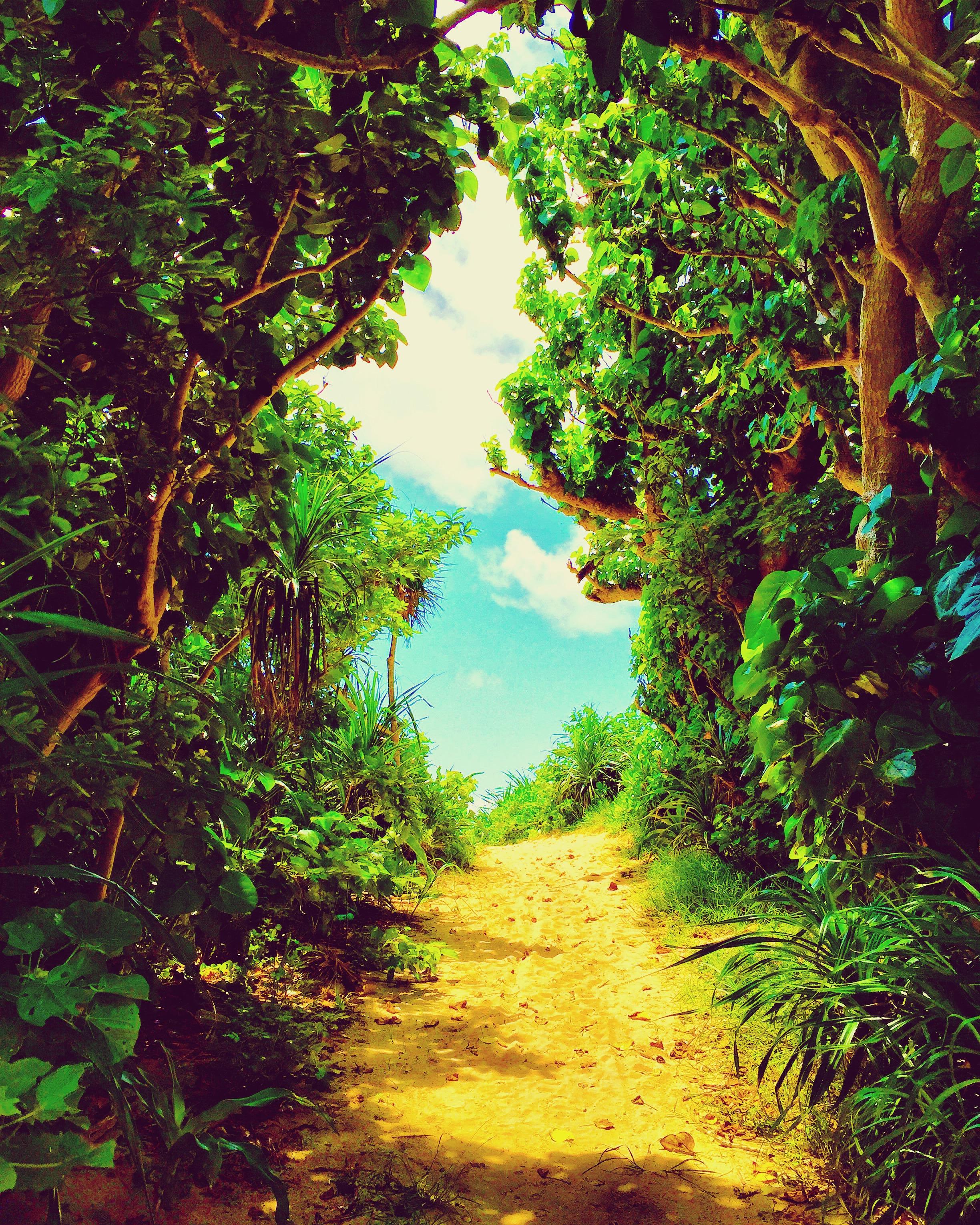 冒険の森へ