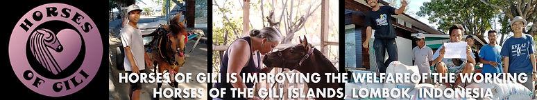 HorseofGili.jpg